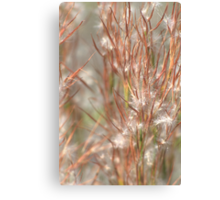 Seeds Canvas Print