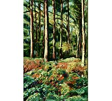 Queenswood, Herefordshire in Autumn Photographic Print