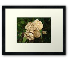 White Withered Roses Framed Print