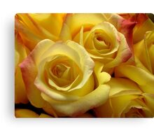 Blushing yellow roses Canvas Print