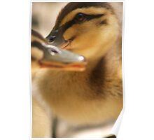 Crossing Beaks Poster