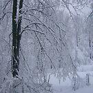 snow lane by Jeannie Matthews