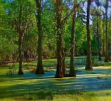 In the Swamp by Kathy Weaver