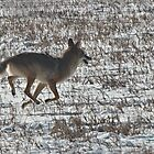Fast crossing by Barb Miller