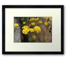 pretty small wild yellow daisy flowers. floral nature photography. Framed Print