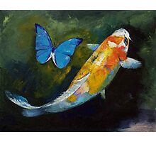 Kujaku Koi and Butterfly Photographic Print