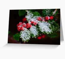 Snow On the Holly Greeting Card