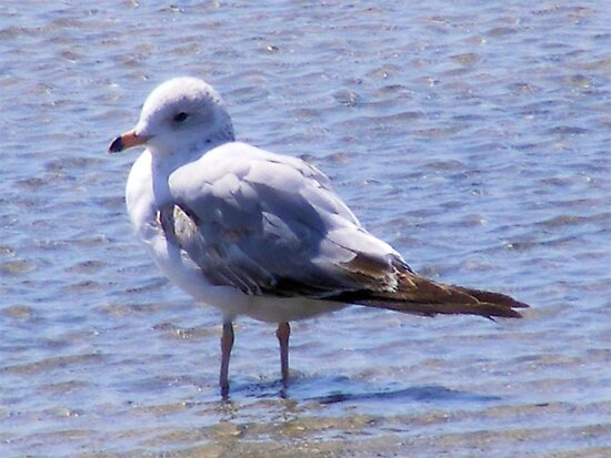Lonely Seagull by John and Marie  Sharp
