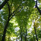 Gorgeous Green Trees by josunshine