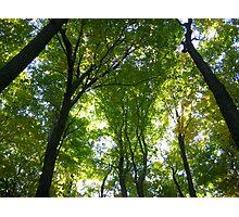 Gorgeous Green Trees Photographic Print