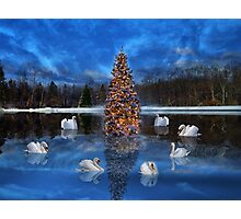 Seven Swans a Swimming Photographic Print
