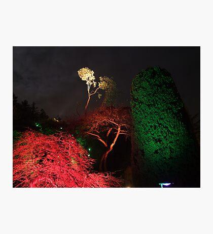 Night in the Sunken Garden(6) Photographic Print