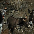 Donkey by Coramilton