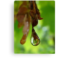Drop About to Drip Canvas Print
