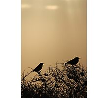 two in the bush Photographic Print