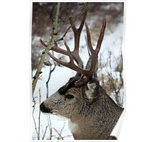 Mule Stag Profile Poster