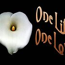 """Calla Lily Isolated on Black """"One Life, One Love"""" Greeting by taiche"""