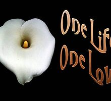 "Calla Lily Isolated on Black ""One Life, One Love"" Greeting by taiche"
