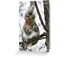 """Hey! Is That A Snowflake On Your Nose?"" Greeting Card"