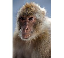 Gibraltar Macaque Portrait Photographic Print