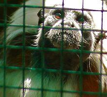 Sad Monkey by chloefish