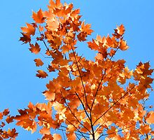 Autumnal Fire by KDoboszPhotosz