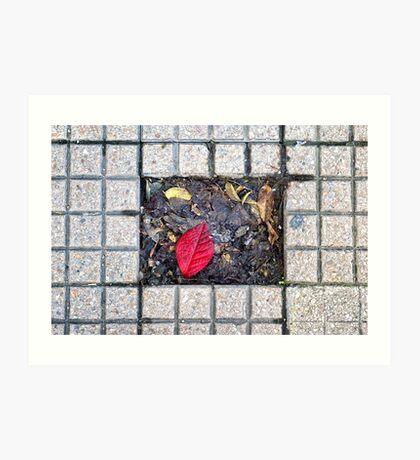 Sidewalk leaf Art Print