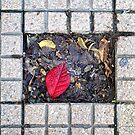 Sidewalk leaf by Silvia Ganora