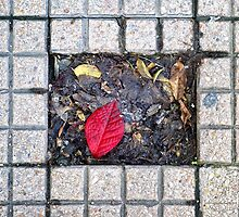 Sidewalk leaf by Silvia Ganora
