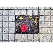 Sidewalk leaf Photographic Print