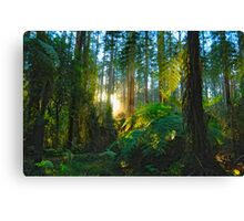 Dream Forest - Sherbrooke, Australia Canvas Print