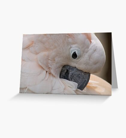 Close-up of White Parrot Greeting Card