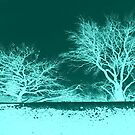 Abstract Trees in Aqua by ©The Creative  Minds