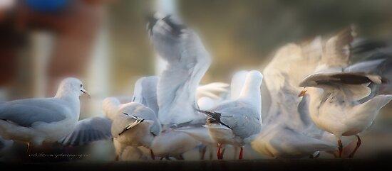 in a flurry © vfp by Vicki Ferrari