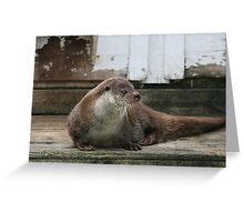 Wha... what was that? Who's there? Greeting Card