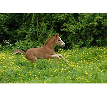 galloping foal! Photographic Print