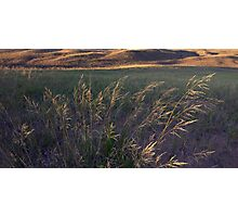 Autumn Dunegrass at Sleeping Bear Dunes Photographic Print