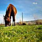 The Green Green Grass of Home by Teri Argo