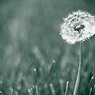 Make a Wish by Teri Argo