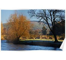 sheep grazing on a frosty morning, Inistioge, County Kilkenny, Ireland Poster