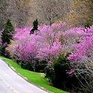 Spring Roads & REDBUDS by Ruth Lambert
