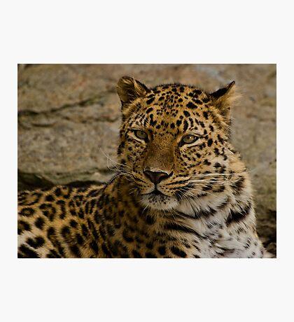 leopard Photographic Print