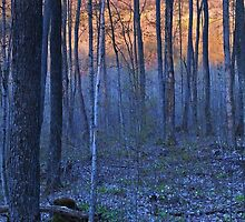 The Sun sets behind the Spring Woods, Petoskey, Michigan by Robert deJonge