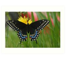 A Black Swallowtail butterfly and Yellow Flower Art Print