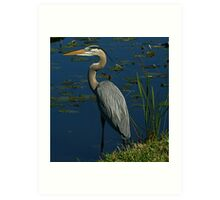I Shot this Heron with a Canon.. LOL Art Print