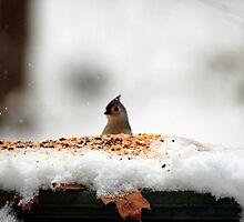 bird peek by Roslyn Lunetta