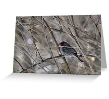 Sparrow in the tree Greeting Card