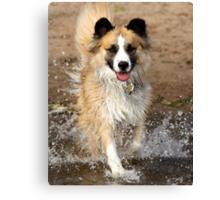 "A ""Secondhand"" Dog~A Joyous Life Canvas Print"