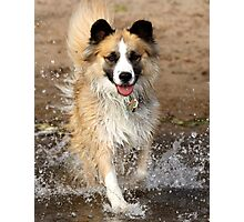 "A ""Secondhand"" Dog~A Joyous Life Photographic Print"