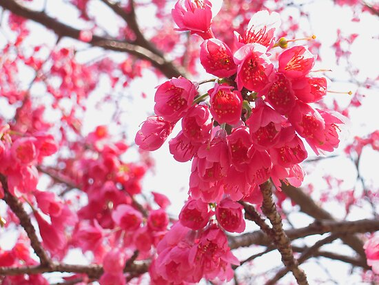 Blossom Time by hinting